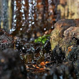 Brown  bokeh by Gordon Simpson - Nature Up Close Rock & Stone