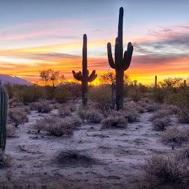 Tucson Sunrise by Charlie Alolkoy - Landscapes Sunsets & Sunrises ( sky, sunset, arizona, tucson, sunrise, landscape, cactus )