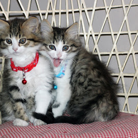 sister and brother by Lize Hill - Animals - Cats Kittens