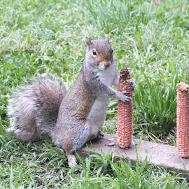 Squirrel  by Richard Steinmetz - Animals Other
