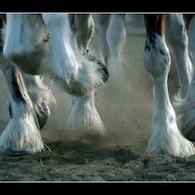 Power by Guy Longtin - Animals Horses