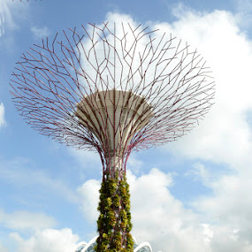Super Tree at Garden By The Bay by Silvano Baru - Nature Up Close Trees & Bushes