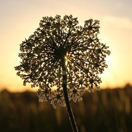 Silhouette by Kevin Klein - Novices Only Flowers & Plants