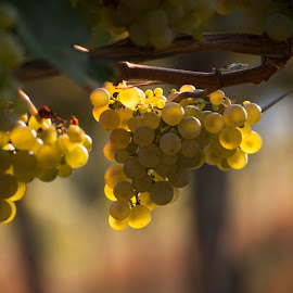 Fruit of the vine by Kevin Williams - Nature Up Close Other plants