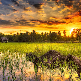 Basic Food by Gilbert Sanchez - Landscapes Prairies, Meadows & Fields ( clouds, water, reflection, sunrises, rice, rice field, cloudscape, reflections, meadows, sun, reflecting, cloud formations, field, sunset, sunsets, sundown, meadow )