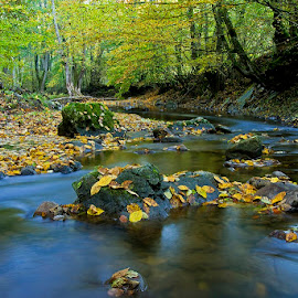 by Siniša Almaši - Nature Up Close Water ( water, up close, stream, forest, leaf, landscape, leaves, depth, colours, nature, autumn, trees, view, stones, light, rocks, river,  )