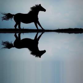 Horse by Christian Wilen - Digital Art Animals ( cirre1 )