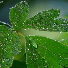 by Pamela Zeng - Nature Up Close Water ( diamonds )