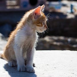 JOYFUL  by Nihan Bayındır - Animals - Cats Kittens ( love, kitten, cat, friends, friendship, photography, animal )