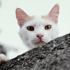 I'm watching you! by Theodoros Theodorou - Animals - Cats Portraits ( outdoor, cat look, x-t1, fujinon, 35mm f1.4, cat, monochrome, fujifilm, cyprus cat, cyprus )