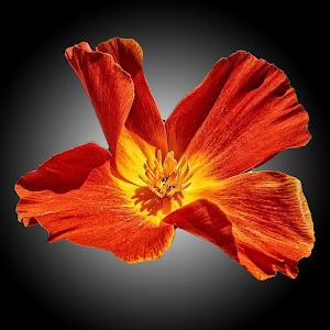 MGI flower 20.jpg