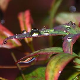 macro by Zhenya Philip - Nature Up Close Natural Waterdrops ( macro photography, earth, nature up close, photo, photography )