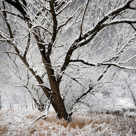 After the Storm by Jon Kinney - Landscapes Prairies, Meadows & Fields ( winter, snow )