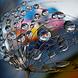 Game After Game by Marija Jilek - Nature Up Close Natural Waterdrops