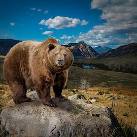by James Harrison - Animals Other Mammals ( landscape )