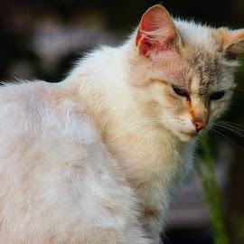 by Slavko Marcac - Animals - Cats Portraits