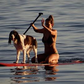 Wet Willie by Campbell McCubbin - Sports & Fitness Watersports ( spaniel, longboard, wet, bikini, dog, paddle )