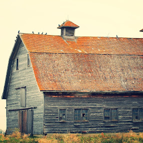 by Danielle Royer - Buildings & Architecture Decaying & Abandoned ( smokey, farm, old,  )