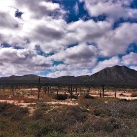 by Phil Bear - Landscapes Deserts ( hills, mountains, desert, mexico, beach, baja )