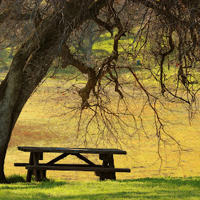Stay a while by Rima Biswas - City,  Street & Park  Vistas ( park, tree, bench, nature, green, pwcbenches, landscape, shade )