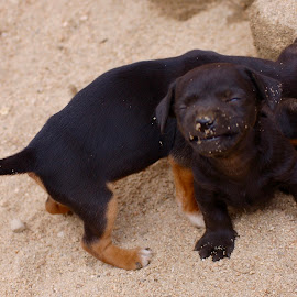 I Love Life!!! by Savannah Eubanks - Animals - Dogs Puppies ( sand, puppy, smiling )