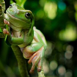 by Joy Advent - Animals Amphibians