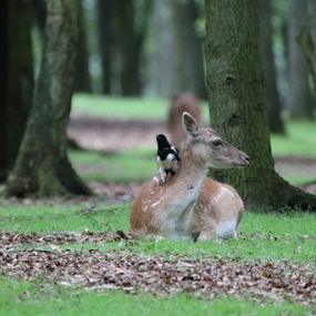 Deer and Birdie by Per Holt Oksen-Larsen - Novices Only Wildlife ( discuss, birdie, weather, the, and, deer )