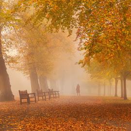 Red Riding Hood by George Johnson - City,  Street & Park  City Parks ( park, london, fog, autumn, fall, trees, brown, leaves, mist, city )
