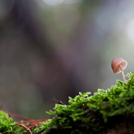 The Universe by Neo Sky - Nature Up Close Mushrooms & Fungi ( mushroom, nature, green, plants, moss, woods, universe )