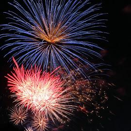 by Liz Huddleston - Abstract Fire & Fireworks ( patriotic, color, cellebration, fireworks, july, night )