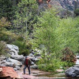 Oak Creek Canyon by Alison Graham - Landscapes Travel ( arizona, creek, canyon, rocks, hiking, arizona 2015 )
