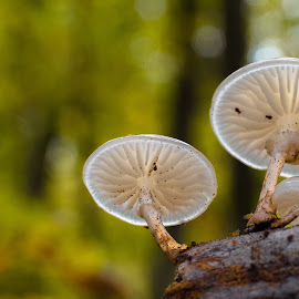 Fungi by Natasja and Martijn - Nature Up Close Mushrooms & Fungi ( macro, fungi, autumn, forest, mushrooms )