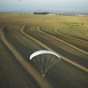Contour berms and shadows by Anthony Allen - Landscapes Prairies, Meadows & Fields ( wheat, paragliders, powered paraglider, furrows, berm, sprouts, shadows, fields )