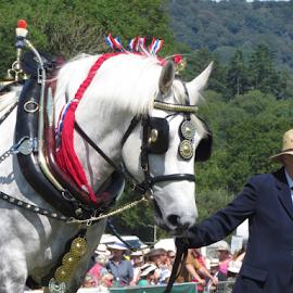 Honiton Show 2014 by Wendy Richards - Animals Horses ( farm, farmers, horse, devon, shires, honiton )