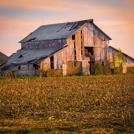 Old Hoosier Barn 03 by Karen Martin - Buildings & Architecture Decaying & Abandoned ( indiana, orange, ranch, old, purple, midwest, rustic, corn, farming, weathered, farm, sky, stubble, barn, barnwood, blue, sunset, pink, sunrise, hoosier, decaying, fields, abandoned )