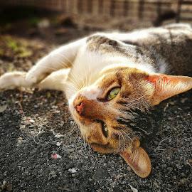 Selfie by Norhan Sukaatti - Animals - Cats Portraits ( mobilography, potrait, cat, depth of field, bokeh )