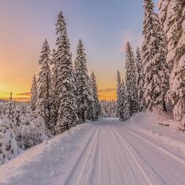 Winther wonderland by Grete Øiamo - Landscapes Sunsets & Sunrises ( snow, trees, sunrise, winther )