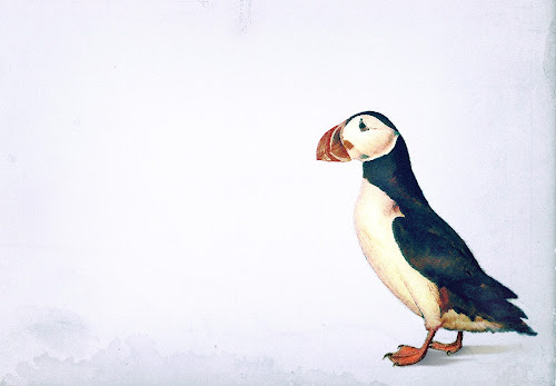 Puffin by Kristján Karlsson - Illustration Animals