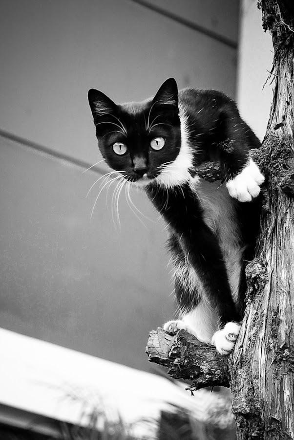 Curious Cat by Xen Xen - Animals - Cats Portraits