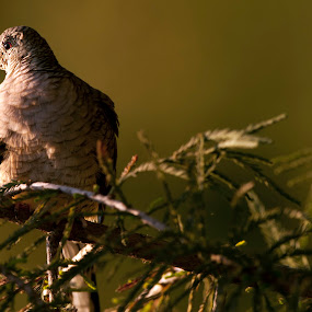 Bird over the branches by Cristobal Garciaferro Rubio - Nature Up Close Trees & Bushes ( bird, leaf, leaves, branches, eye )