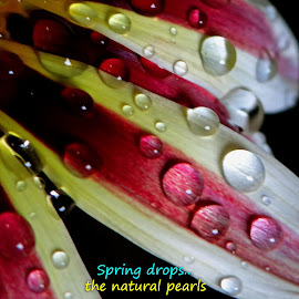 Spring... by Asif Bora - Typography Quotes & Sentences