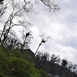 Scary trees by Rohit Dabhade - Nature Up Close Trees & Bushes