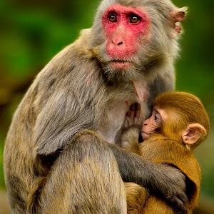 Monkeys processed Feb 19.jpg