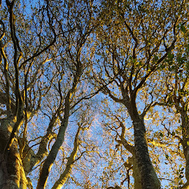 Grow together  by Martina Martinec - Uncategorized All Uncategorized ( nature, nature up close, growth, branches, trees, branch )
