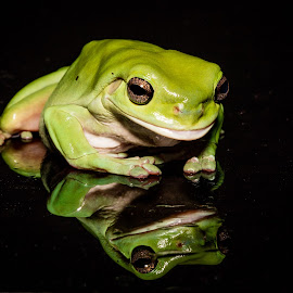 Green Frog by Gary Tindale - Animals Amphibians ( reflection, macro, frog, green, amphibian )