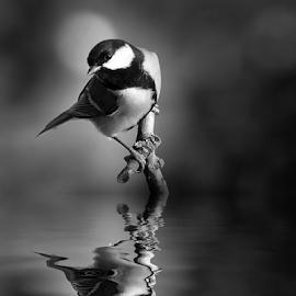 by Ad Spruijt - Black & White Animals (  )