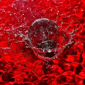 bumbilbulb by Angelo Jadulco - Artistic Objects Still Life ( water, splash, bulb )