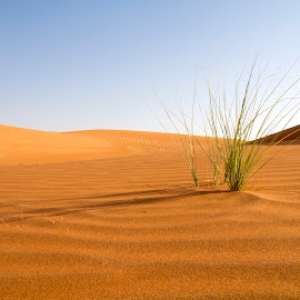 Hope by Kingsly Xavier George - Landscapes Deserts ( desert, grass, green, uae, sharjah )