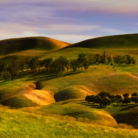On The Road To Monterey by David Hammond - Landscapes Mountains & Hills ( hills, mountains, nature, california, farmland, pastures, sunrise, landscapes, cows, grassing,  )