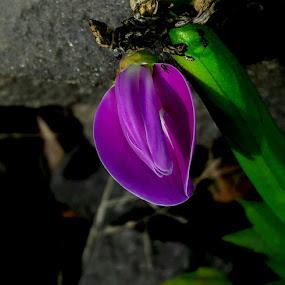 by Rajashri Joshi - Flowers Flowers in the Wild ( tiny, beautiful flower, purple, nature )